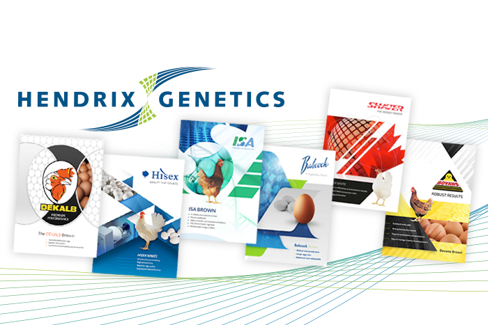 Hendrix Genetics – A real chicken and egg problem!